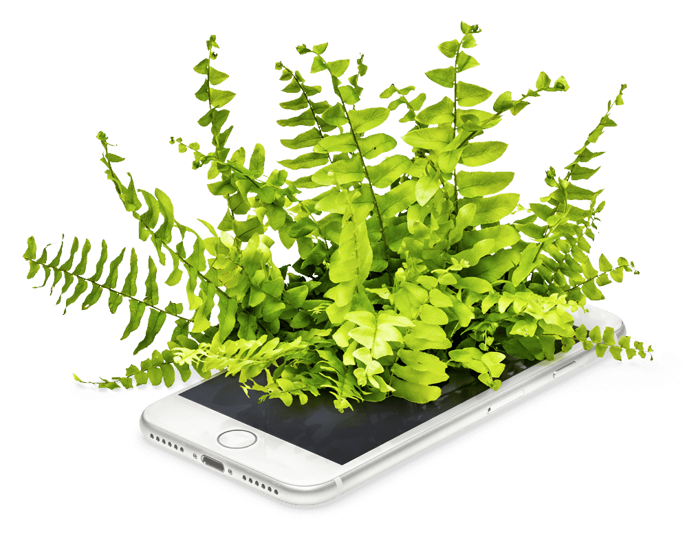 A fern growing out of a mobile phone screen